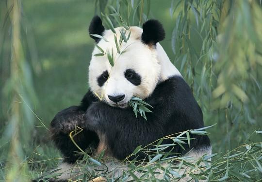 Panda 3.9.2